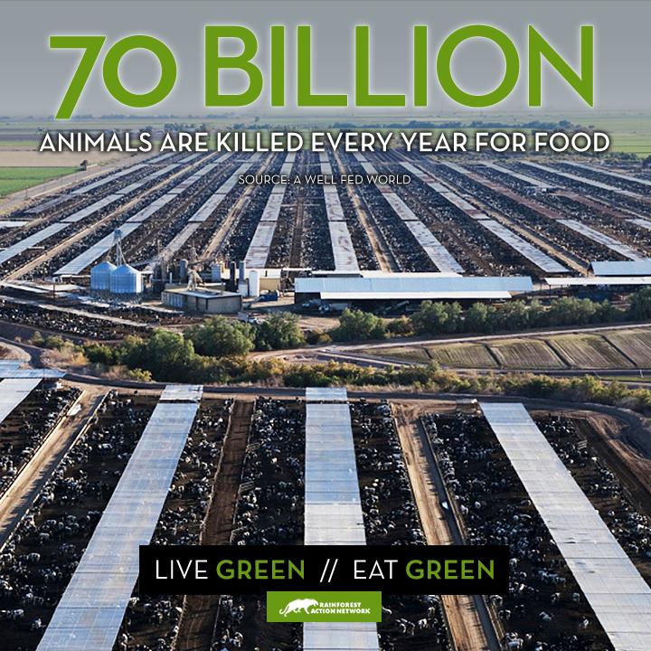 70 billion animals