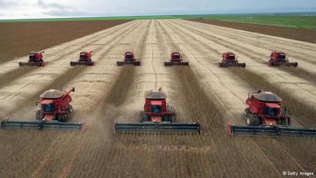 Mono crops