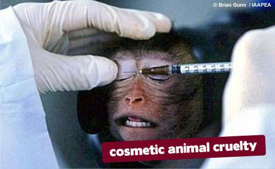 Testing on animals 3