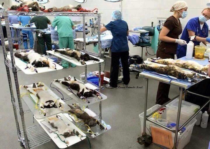Testing on animals 4