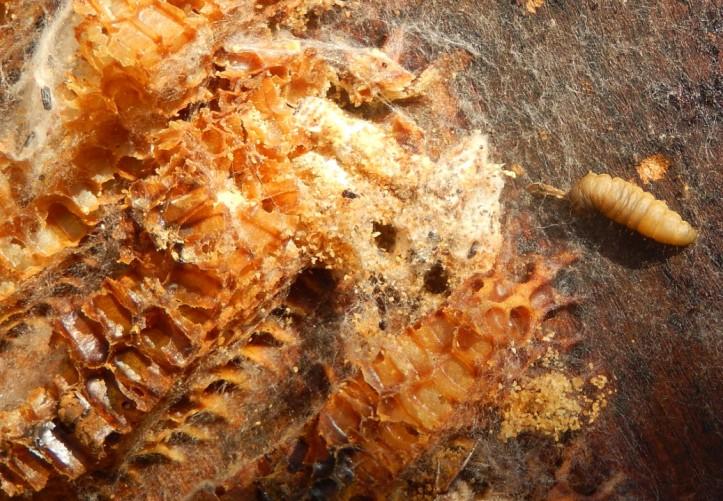Moth damage 3