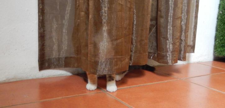 ghost cat 1